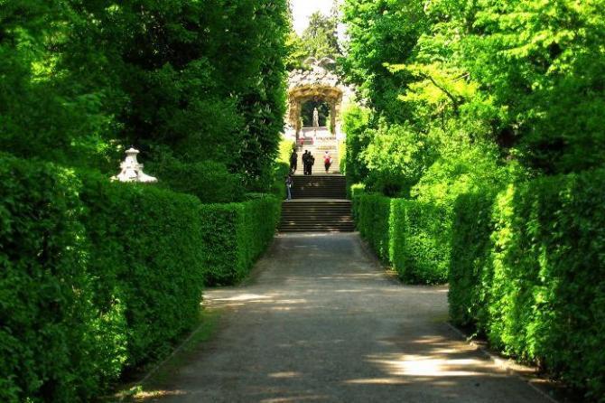 Żywopłot, naturalna -ściana ochronna w naszych ogrodach