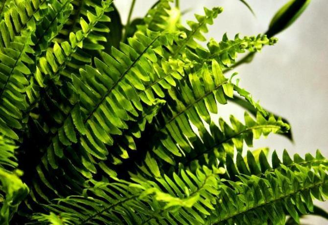 Rośliny oczyszczające powietrze - rośliny pochłaniające zanieczyszczenia