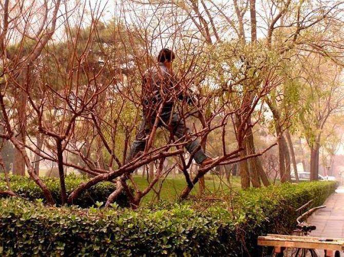 Wiosenne przycinanie drzew i krzewów