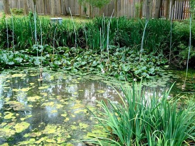 Glony w oczku wodnym  zwalczanie