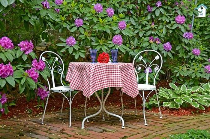 Choroby rododendronów  objawy i zwalczanie