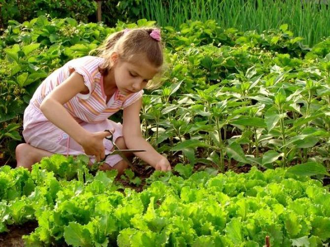 Warzywnik  ogród warzywny
