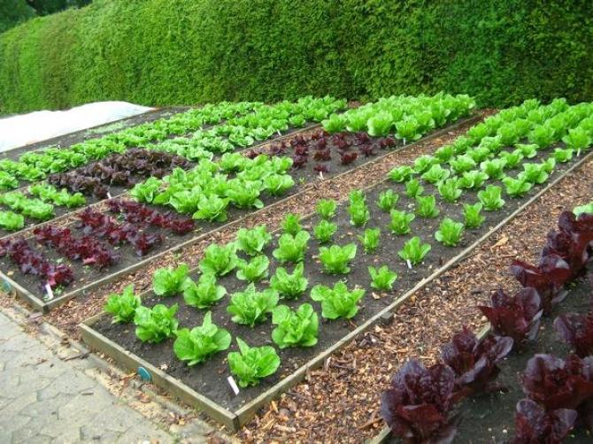 Ogródek warzywny krok po kroku