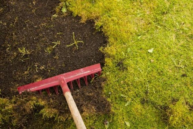 Mech na trawniku  skuteczne zwalczanie