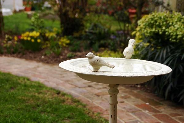 Białe poidełko dla ptaków