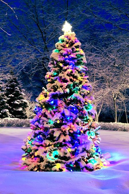 Drzewko świąteczne w ogrodzie