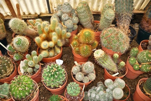 Galeria kaktusów