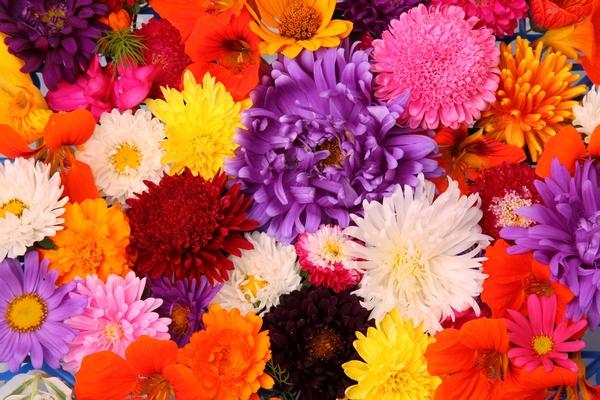 Jesień pełna kwiatów