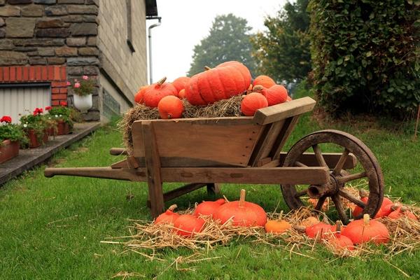 Jesienna dekoracja w ogrodzie