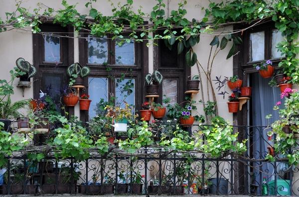 Rośliny domowe uzupełnieniem balkonowych aranżacji