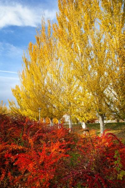 Rośliny drzewiaste w słonecznych barwach