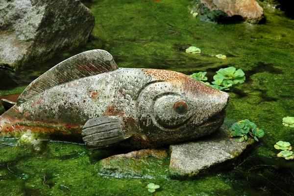 Ryba z kamienia