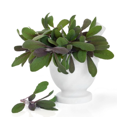 Szałwia lekarska- Salvia officinalis