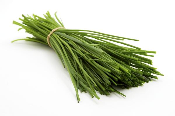 Szczypiorek- Allium schoenoprasum