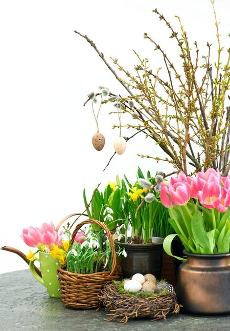 Wiosenne kwiaty cebulowe, a dekoracje wielkanocne