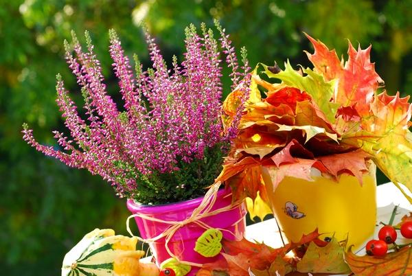 Wrzosy jesienne kwiaty