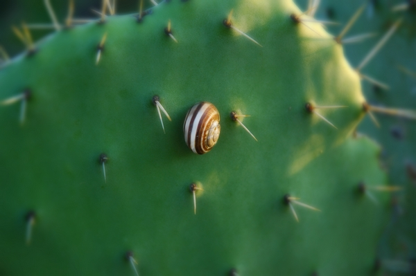 Zdjęcia kaktusów - choroby i szkodniki