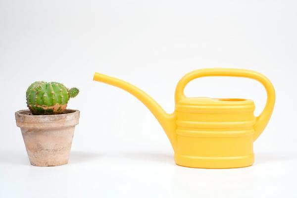Zdjęcia kaktusów - podlewanie