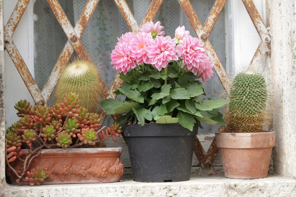 Zdjęcia kaktusów - stanowisko