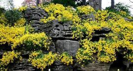 Rośliny na skalniak – jakie rośliny na skalniak