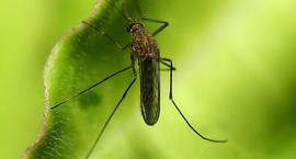Komary w ogrodzie
