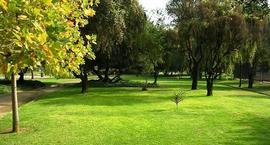 Przesadzanie drzew - Jak przesadzać duże drzewa?