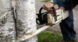 Cięcie drzew