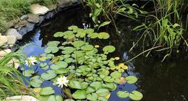 Rośliny wodne