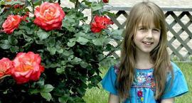 Róża wielkokwiatowa