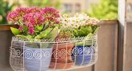 Rośliny balkonowe dla każdego
