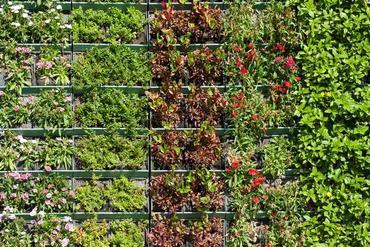 Ogród wertykalny – tajemnicze zielone ściany
