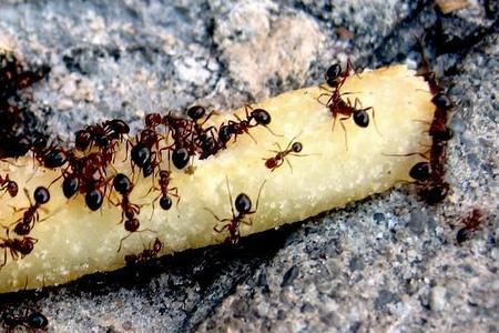 Jak zwalczać mrówki w ogrodzie?