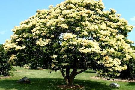Niskie drzewa w ogrodzie