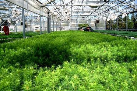 Wegetatywne sposoby rozmnażania roślin