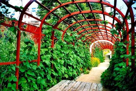 Pergole ogrodowe – jaka pergola do ogrodu?