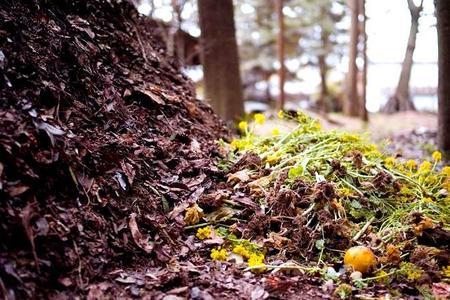 Kompost – jak zrobić kompost?