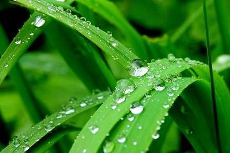 Deszczówka w ogrodzie