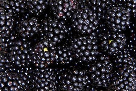Uprawa jeżyn – owoce w ogrodzie