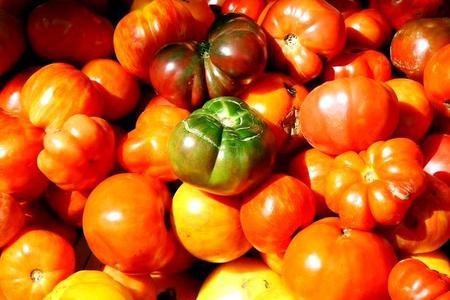 Choroby pomidorów