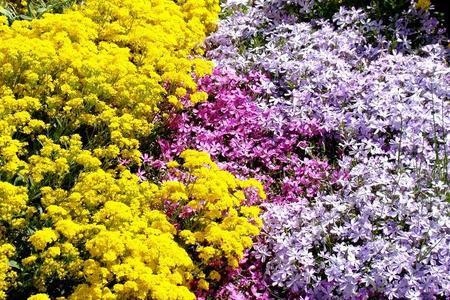 Jak sadzić rośliny w ogrodzie?