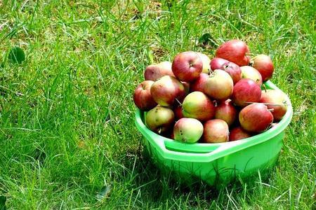 Owoce z mojego sadu