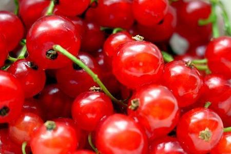 Porzeczka czerwona – Ribes rubrum