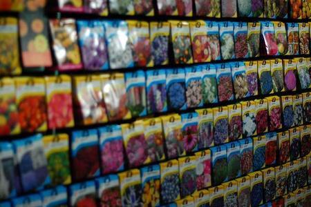Jak kupować nasiona?