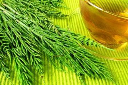 Skrzyp polny - rośliny lecznicze w ogrodzie
