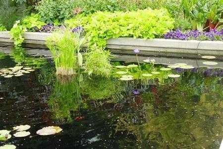 Uszczelnianie oczka wodnego - folie do oczek wodnych