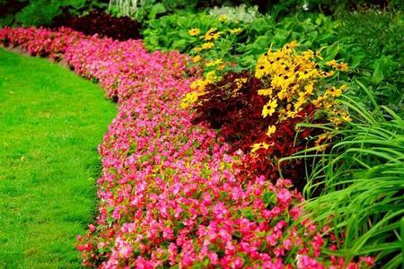 Rośliny ozdobne - wieloletnie, krzewinki i pnącza