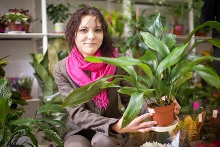 Rośliny doniczkowe cieniolubne