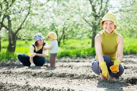 Wysiew nasion warzyw – terminy siewu i rozstawa