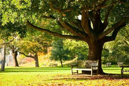 Drzewa ozdobne - liściaste i iglaste