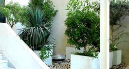 Kwiaty i rośliny doniczkowe do biura i firmy